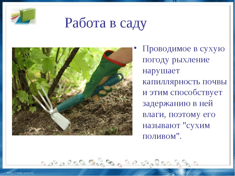 Работа в саду Проводимое в сухую погоду рыхление нарушает капиллярность почвы...