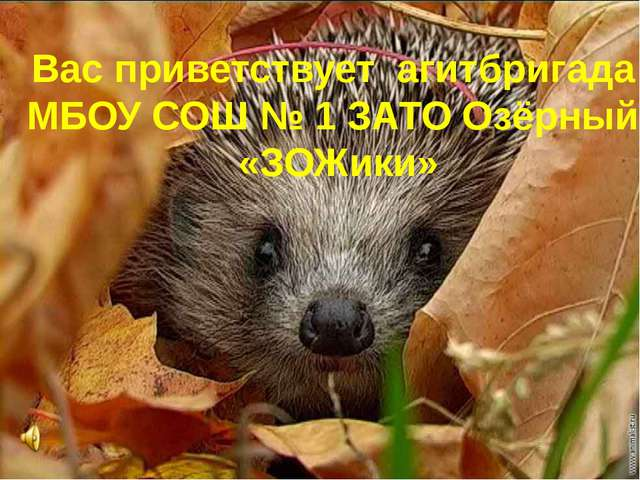 Вас приветствует агитбригада МБОУ СОШ № 1 ЗАТО Озёрный «ЗОЖики»