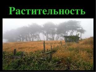 Растительность Растения и животные наиболее распространены в Приморской части