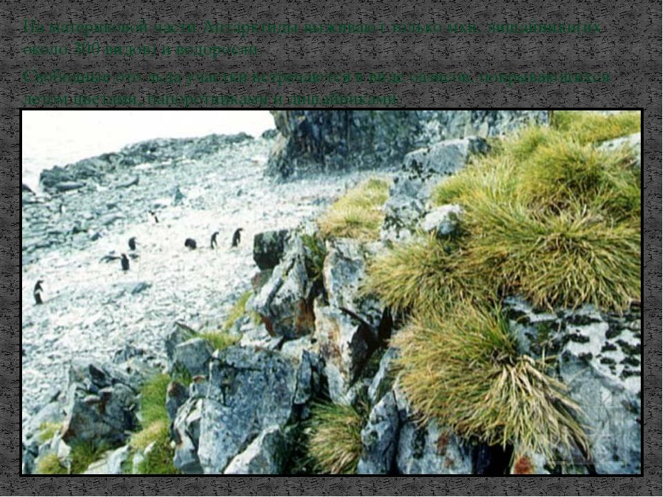 На материковой части Антарктиды выживают только мхи, лишайники(их около 300 в...