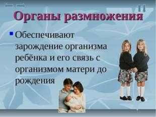 Органы размножения Обеспечивают зарождение организма ребёнка и его связь с ор