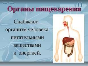 Органы пищеварения Снабжают организм человека питательными веществами и энерг