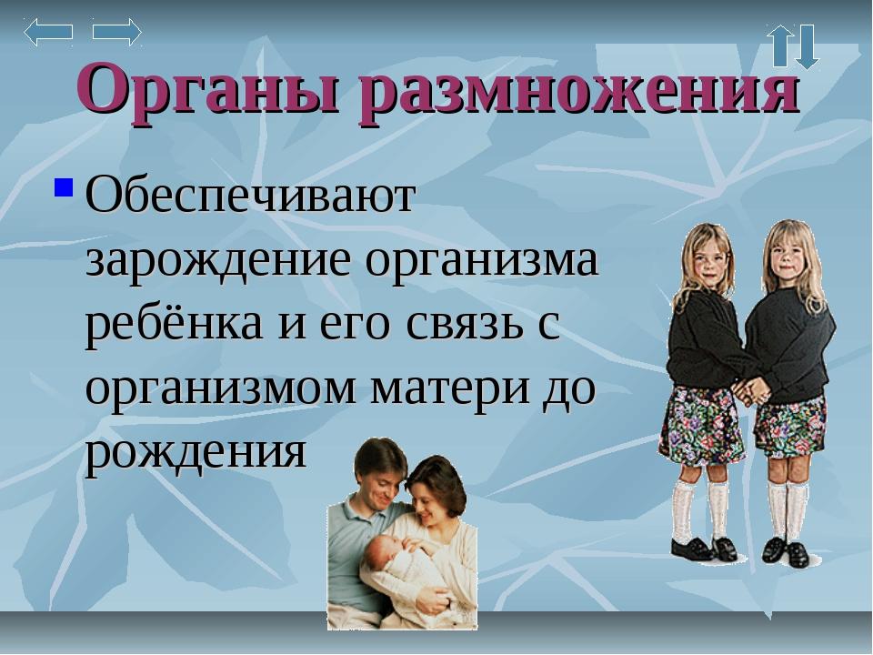 Органы размножения Обеспечивают зарождение организма ребёнка и его связь с ор...