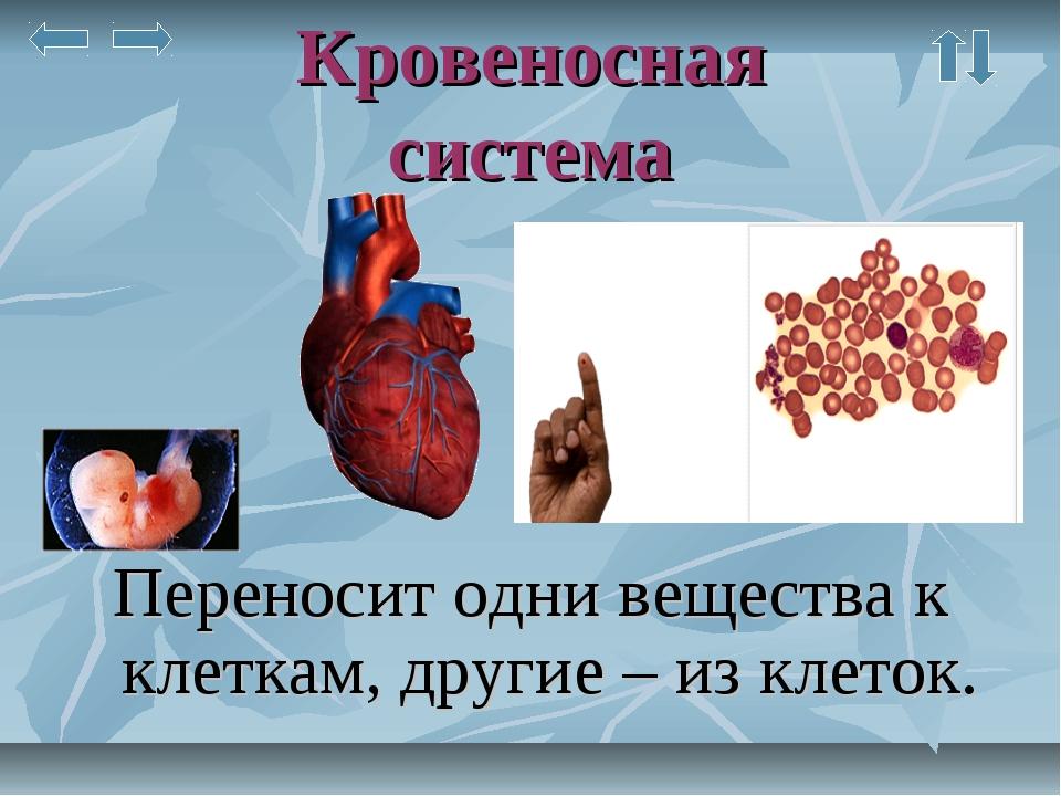 Кровеносная система Переносит одни вещества к клеткам, другие – из клеток.