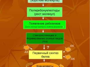 Полирибонуклеотиды (рост молекул) Появление рибозимов (часть молекул приобрел