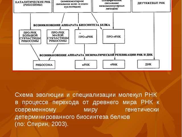 Схема эволюции и специализации молекул РНК в процессе перехода от древнего ми...