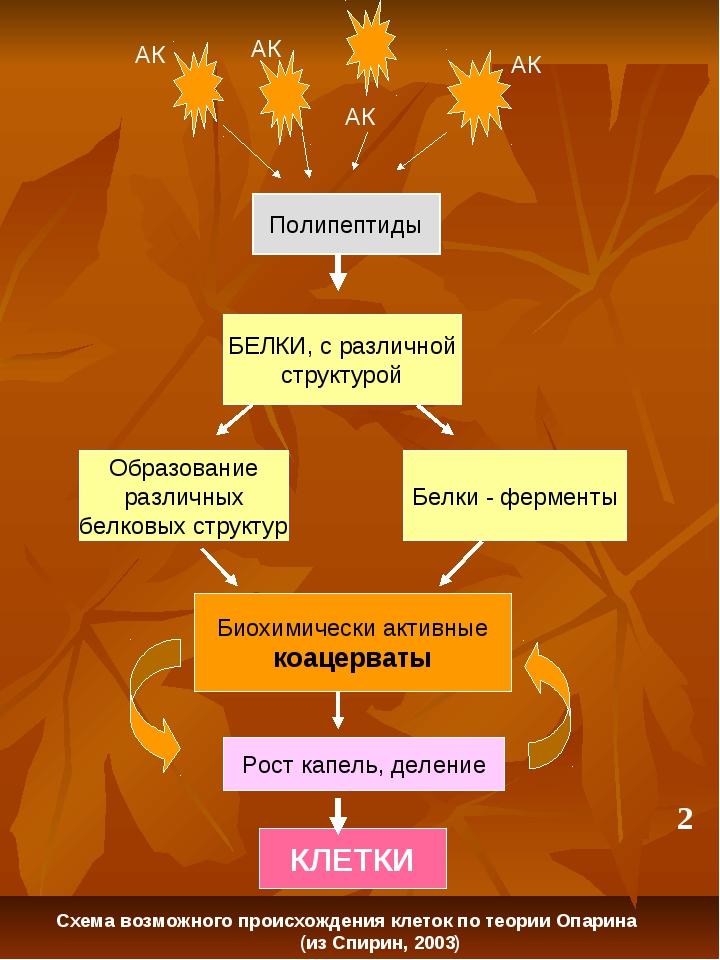 Полипептиды Белки - ферменты Образование различных белковых структур Биохимич...