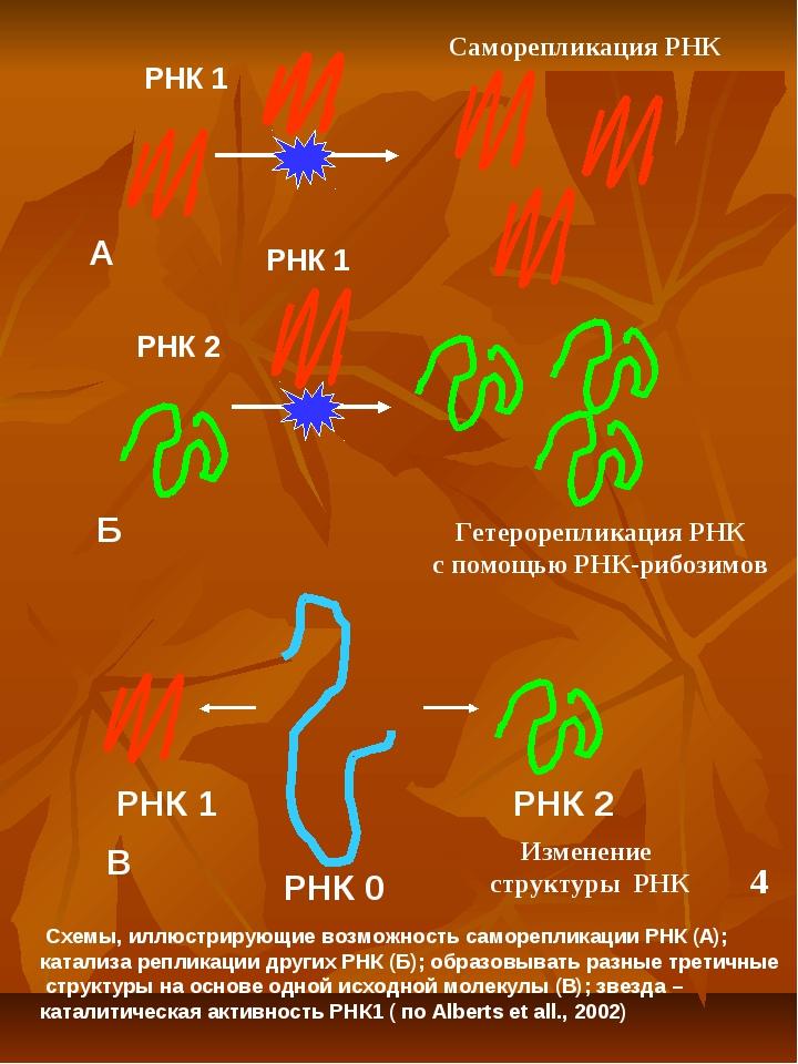 А Б В Схемы, иллюстрирующие возможность саморепликации РНК (А); катализа репл...