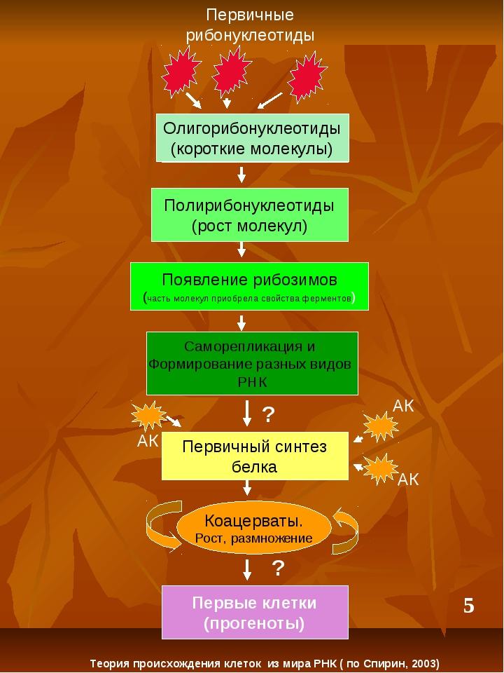 Полирибонуклеотиды (рост молекул) Появление рибозимов (часть молекул приобрел...