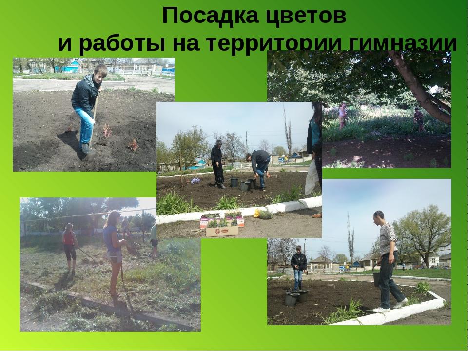 Посадка цветов и работы на территории гимназии