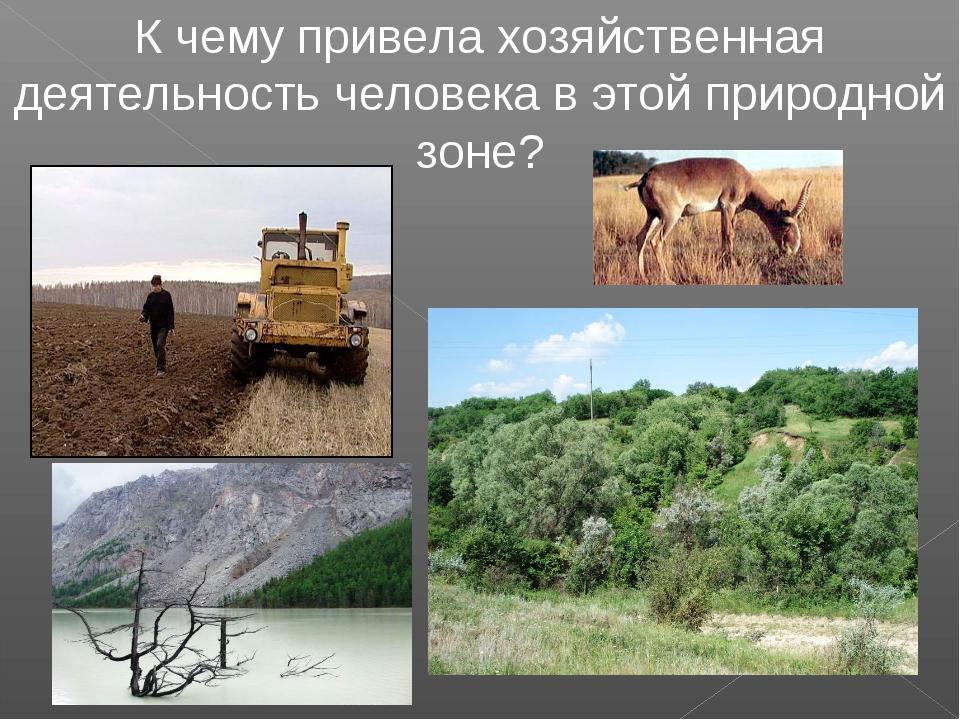 К чему привела хозяйственная деятельность человека в этой природной зоне?