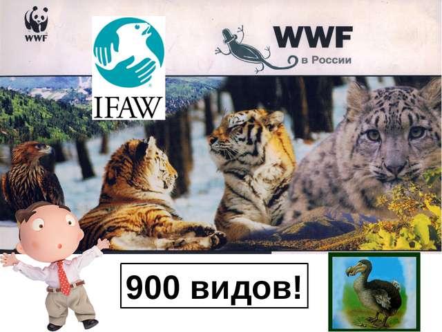 900 видов! На этой странице мы покажем малую часть тех животных, которые поги...