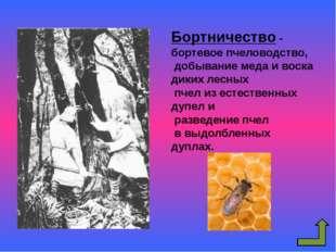 Земледелие у восточных славян Земледелие Подсечно-огневое Переложное Подрубит