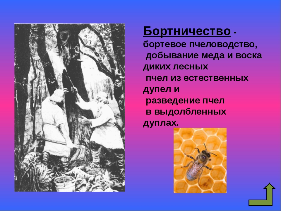 Земледелие у восточных славян Земледелие Подсечно-огневое Переложное Подрубит...