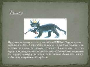 Предсказательница погоды, у нее девять жизней. Черная кошка – спутница колд