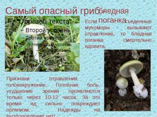 Самый опасный гриб - бледная поганка Признаки отравления – головокружение, Го