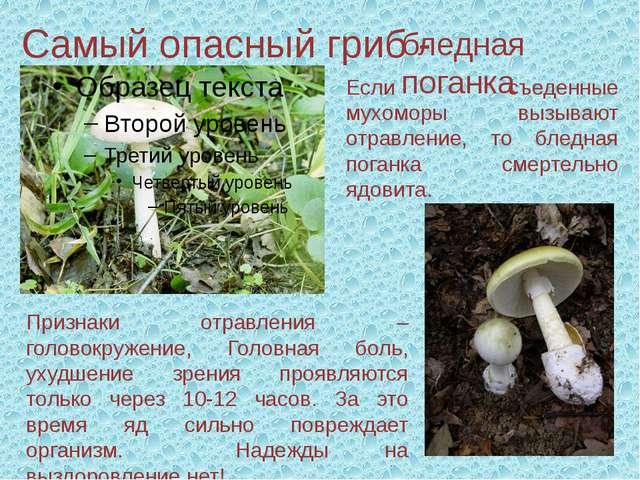 Самый опасный гриб - бледная поганка Признаки отравления – головокружение, Го...