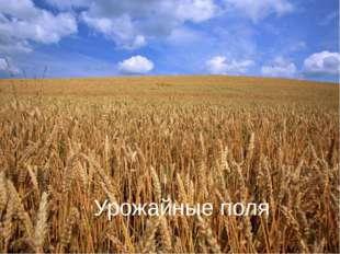 Урожайные поля