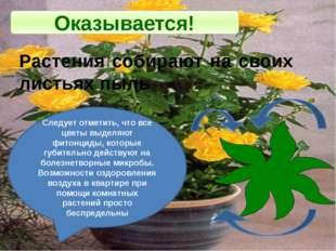 Оказывается! Растения собирают на своих листьях пыль Следует отметить, что вс