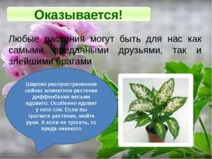 Оказывается! Любые растения могут быть для нас как самыми преданными друзьями