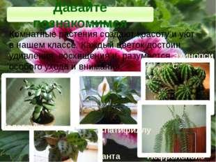 Комнатные растения создают красоту и уют в нашем классе. Каждый цветок достои