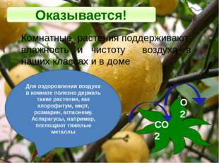 Оказывается! Комнатные растения поддерживают влажность и чистоту воздуха в на