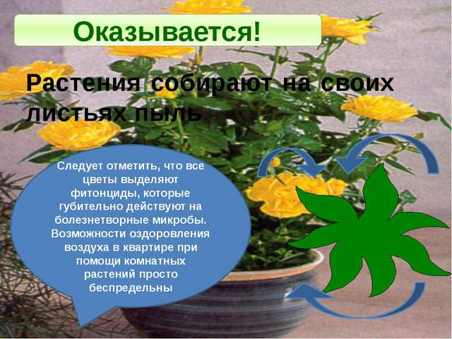 Оказывается! Растения собирают на своих листьях пыль Следует отметить, что вс...