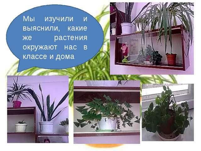 Мы изучили и выяснили, какие же растения окружают нас в классе и дома