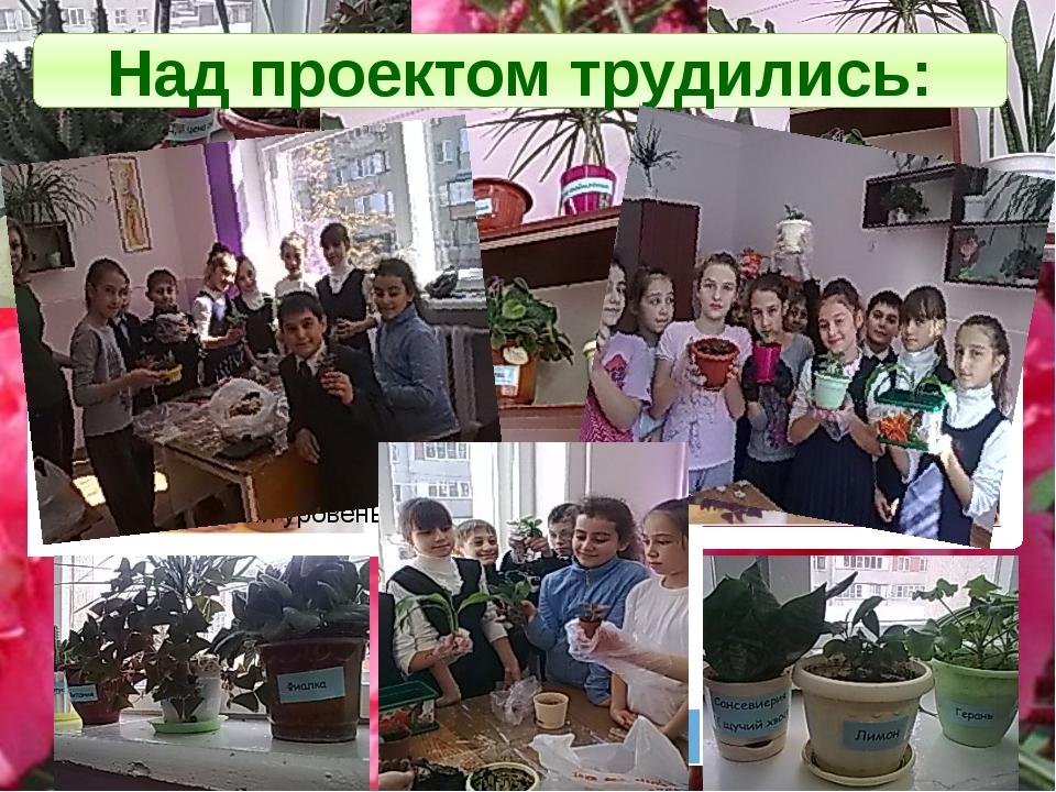 Нагибина Анастасия Разгуляев Антон Косарев Илья Над проектом трудились: