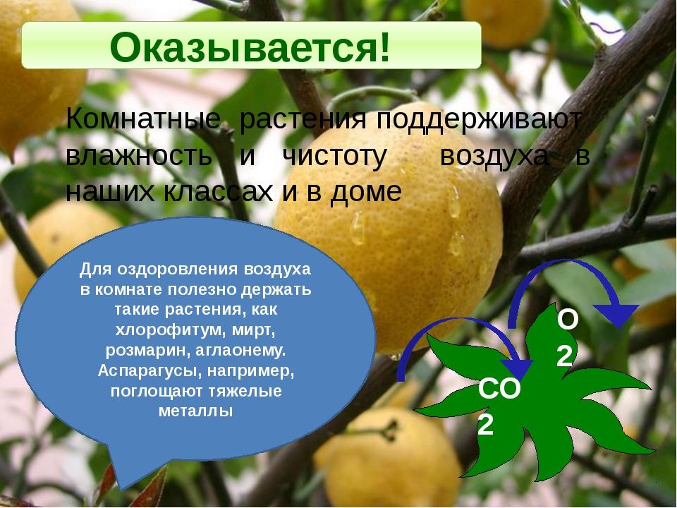 Оказывается! Комнатные растения поддерживают влажность и чистоту воздуха в на...