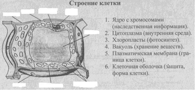 F:\Биология\Биология НКС\1.jpg