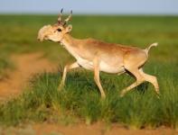 Животные обитающие в степи: всеядные, хищники, растительноядные. Животный мир степей: природа, фото, картинки, видео. Природа