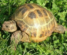 В Киеве возле зоопарка ловили черепаху - Разное на Новостей.COM