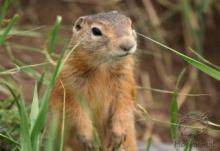 Что делают животные в случае опасности - 18 Сентября 2011 - Мусора НЕТ!