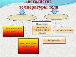 Постоянство температуры тела теплопродукция теплоотдача