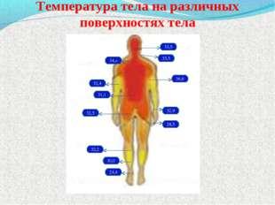 Температура тела на различных поверхностях тела 33,5 33,5 34,о 36,6 32,4 31,1