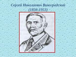 Сергей Николаевич Виноградский (1856-1953)
