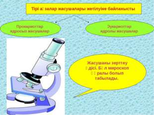 Тірі ағзалар жасушалары жетілуіне байланысты Прокариоттар ядросыз жасушалар Э