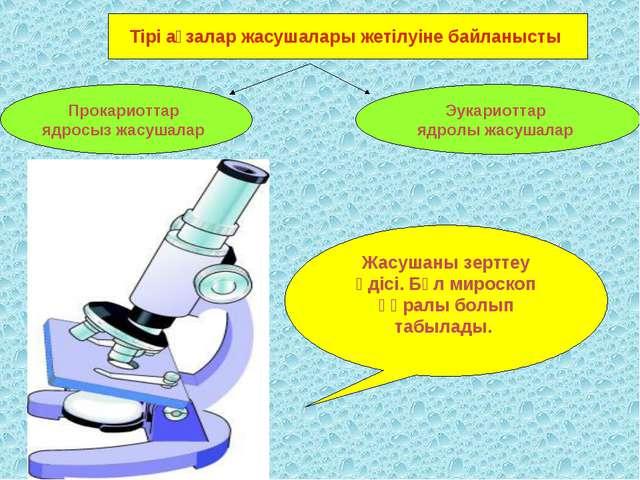 Тірі ағзалар жасушалары жетілуіне байланысты Прокариоттар ядросыз жасушалар Э...