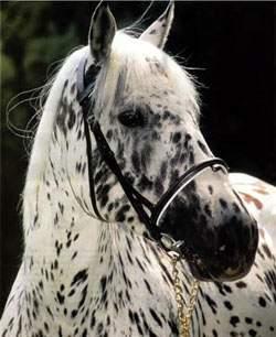 лошадь, фотография, фото, фотки