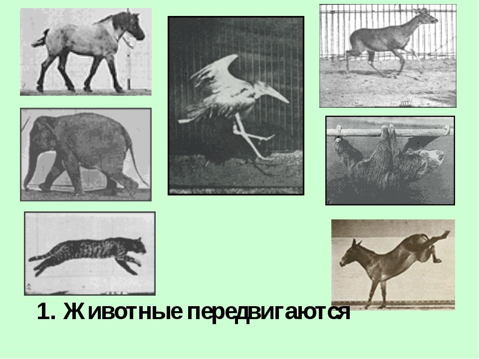 1. Животные передвигаются