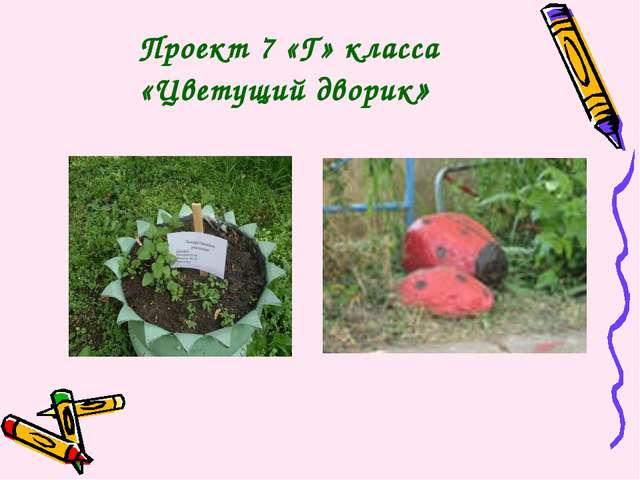 Проект 7 «Г» класса «Цветущий дворик»