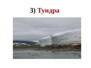 3) Тундра