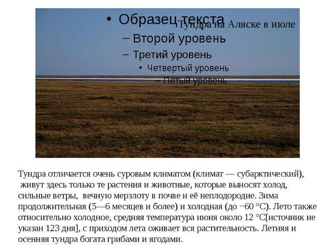 Тундра отличается очень суровым климатом (климат — субарктический), живут зде...