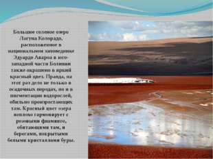 Большое соленое озеро Лагуна Колорадо, расположенное в национальном заповедни