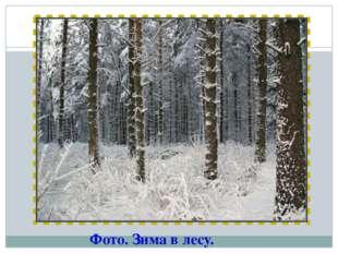 Фото. Зима в лесу.