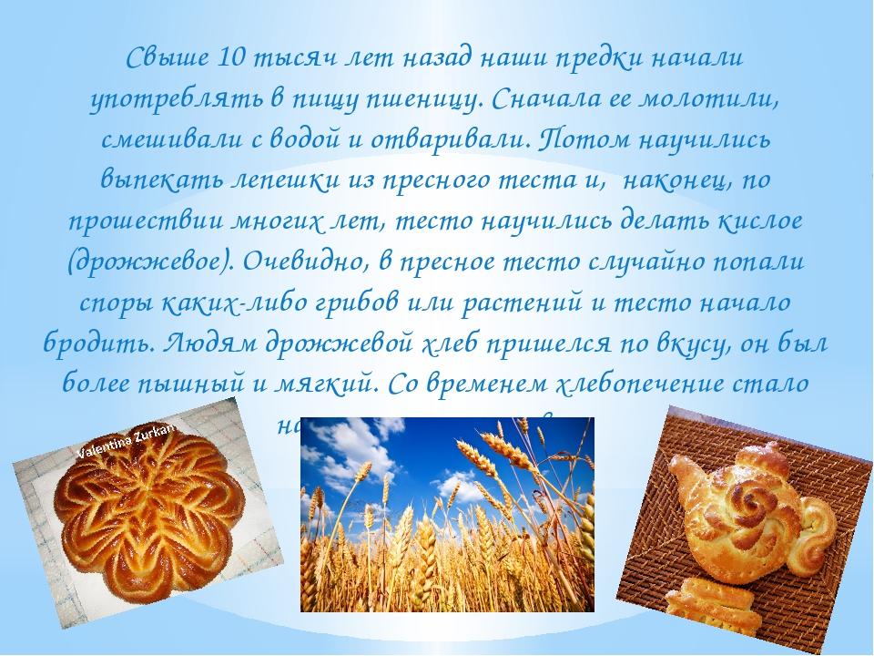 Свыше 10 тысяч лет назад наши предки начали употреблять в пищу пшеницу. Снач...