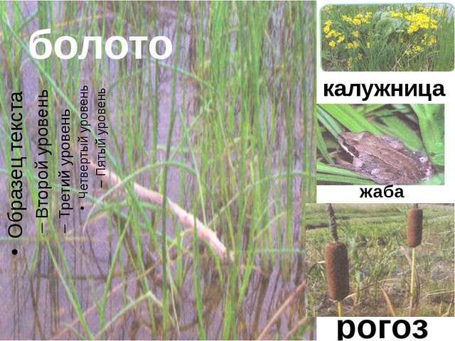 болото калужница рогоз жаба