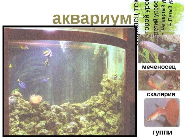 аквариум меченосец скалярия гуппи