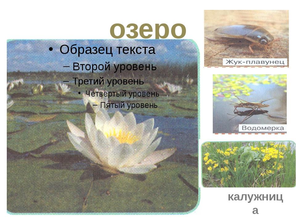 озеро калужница